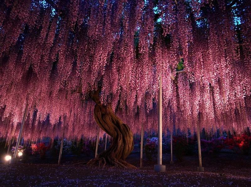 цветущие деревья мира фото земляники делятся основном