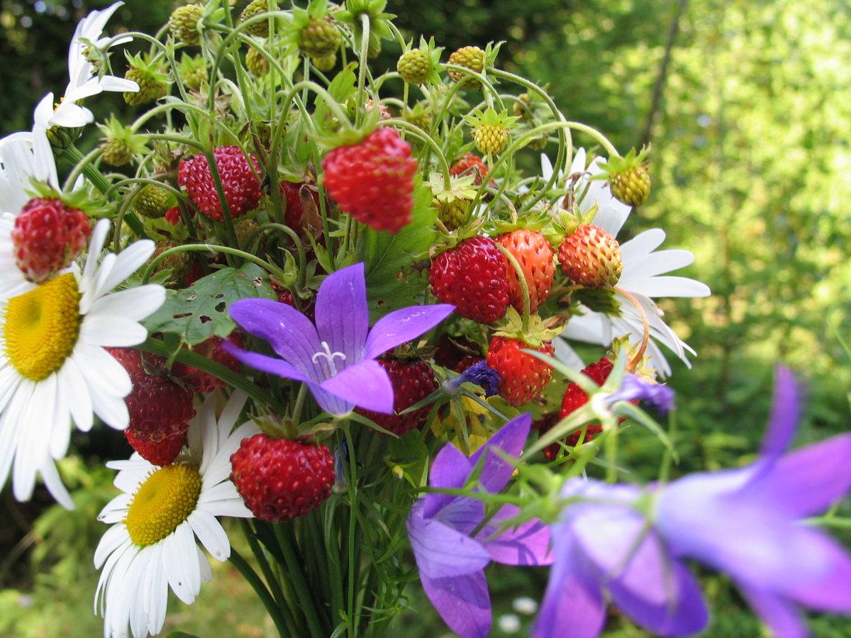 с днем рождения картинки полевые цветы кто кого