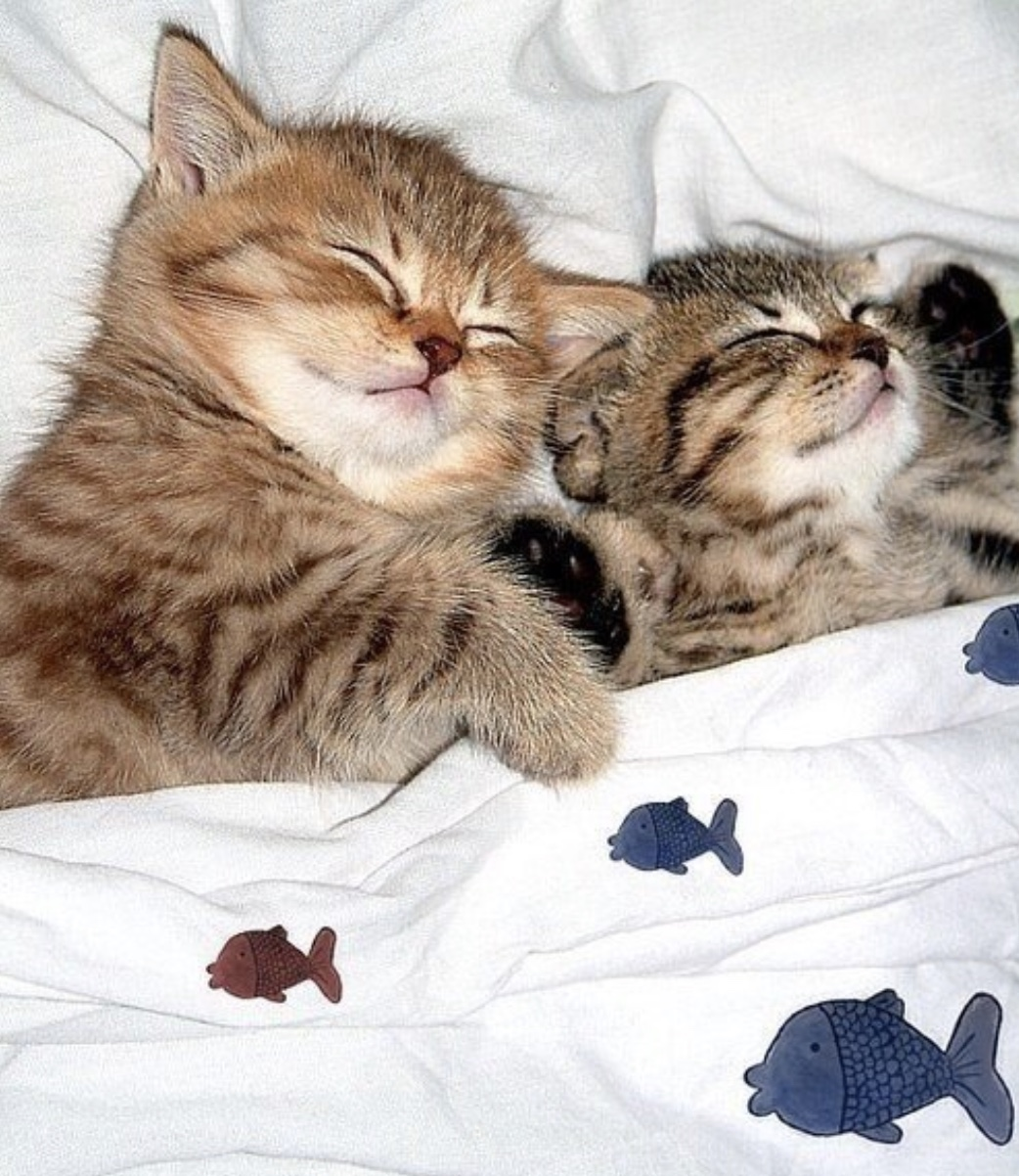 Картинки спокойной ночи кошка, своими руками внутри