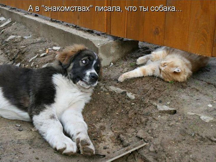 Новые картинки про собак с надписями