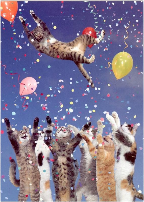 Мое сердце, открытки с днем рождения мужчине коты