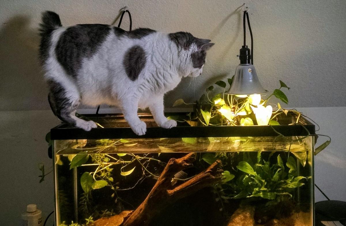 картинка кот у аквариума с рыбками мероприятий